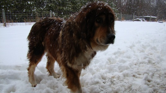 FiFi Snow